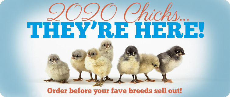 2020 Chicks Are Here!