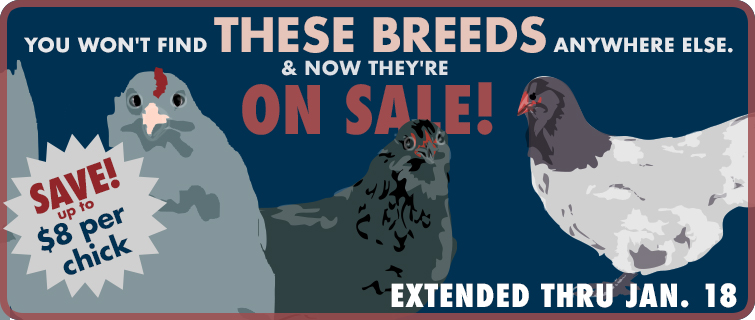 exclusive breeds on sale