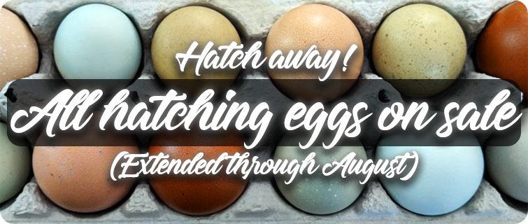 Hatching Egg Sale thru 8/31/19