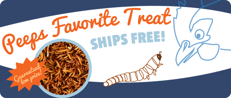 Peeps Favorite Treat (Mealworms)