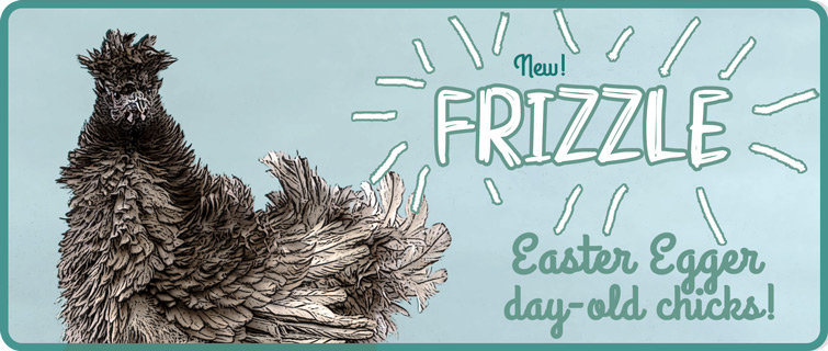 frizzle EE