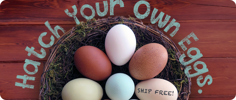 hatch your own eggs - ships free