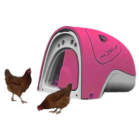 My Pet Chicken - Pink Eglu (with 2 chickens) :  pink chicken coop with chickens chicken starter kit gingernut ranger