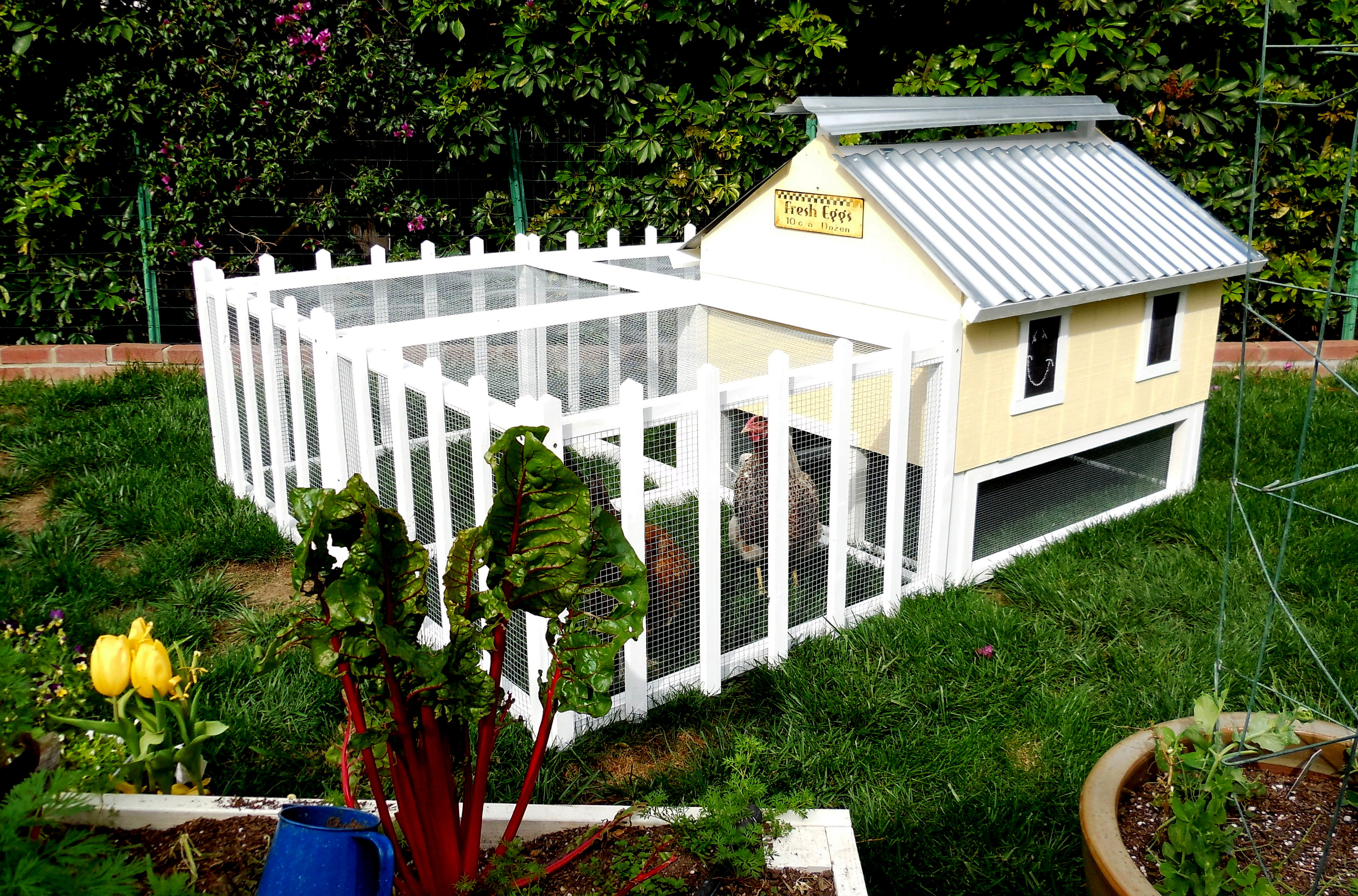 Easy clean chicken coop cube run from my pet chicken for Homemade chicken coops for sale