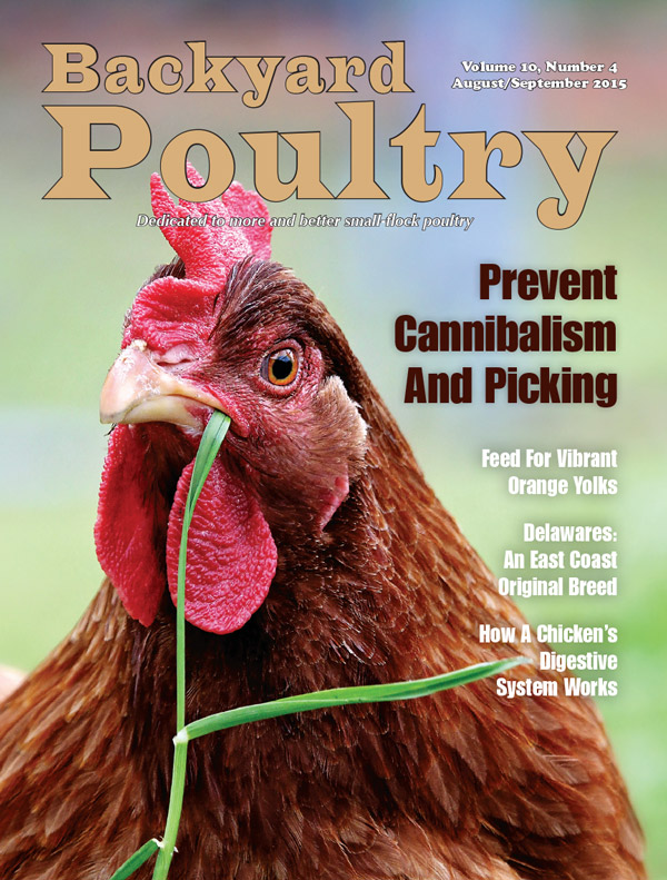 Backyard Poultry Magazine - 1 year subscription. August-September 2015 cover - Backyard Poultry Magazine - 1 Year Subscription