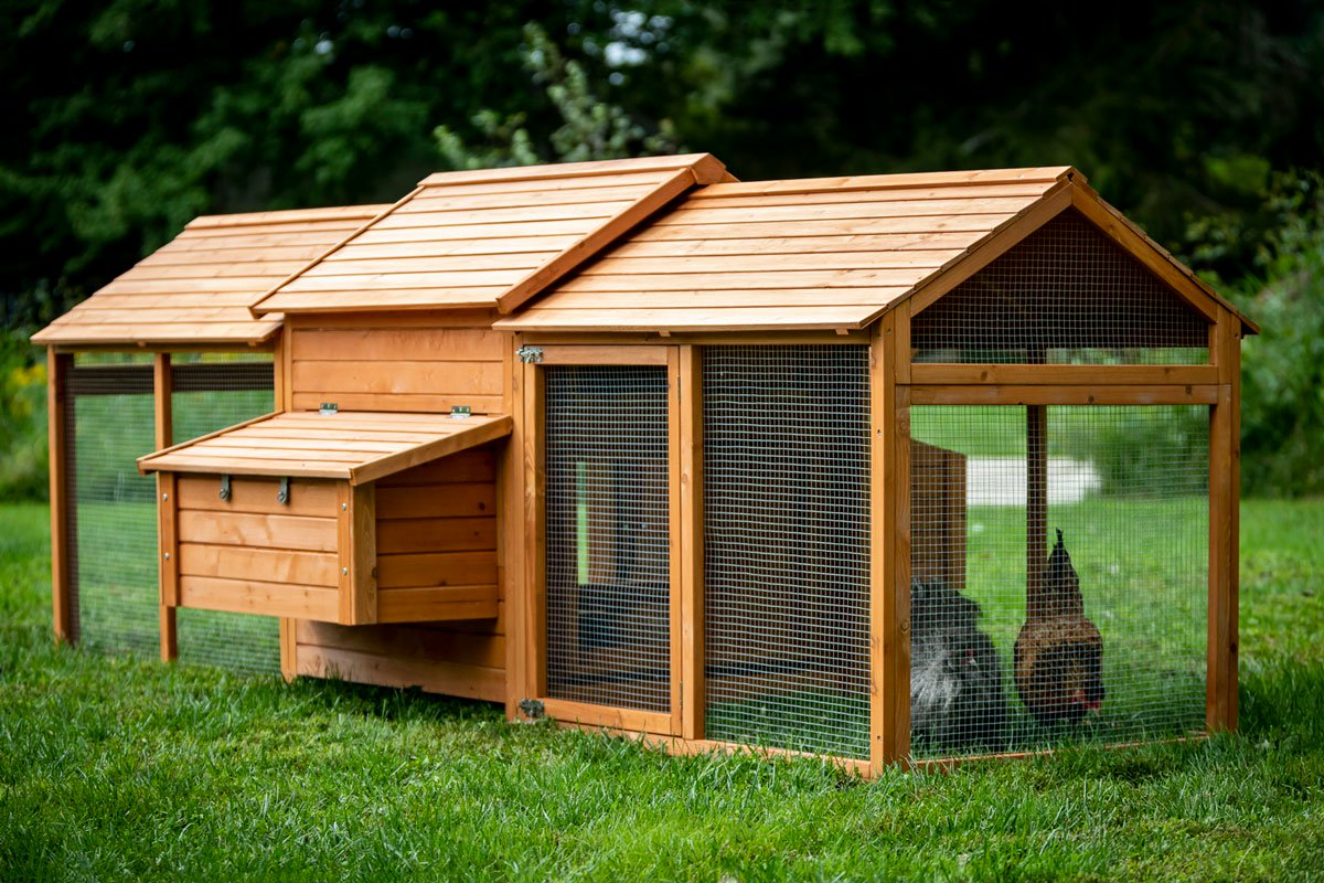 The Bungalow Chicken Coop Up To 6 Chickens