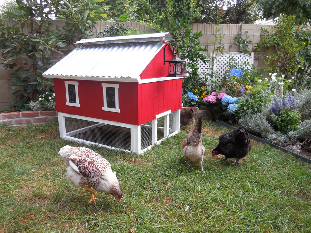 Smart easy clean chicken coop up to 6 chickens - Exterior painting in cold weather ...