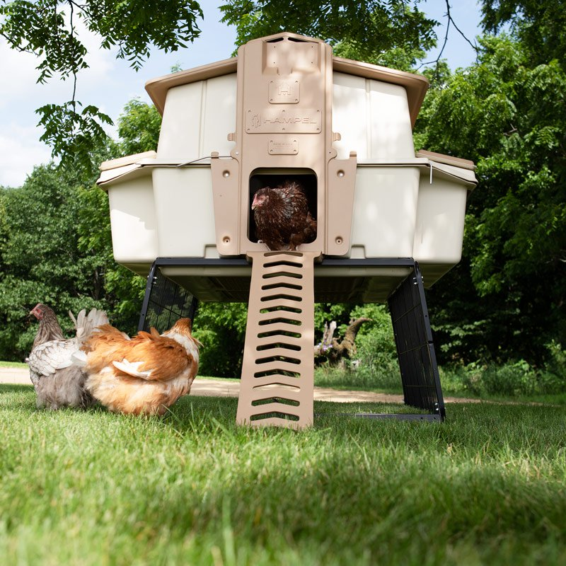 Ultimate Chicken Coop Wfeeder And Waterer Up To 6 Chickens