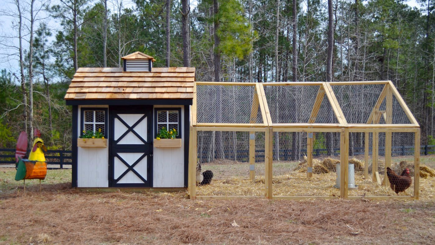 Chicken coop plans for 10 chickens the for Plans for a chicken coop for 12 chickens