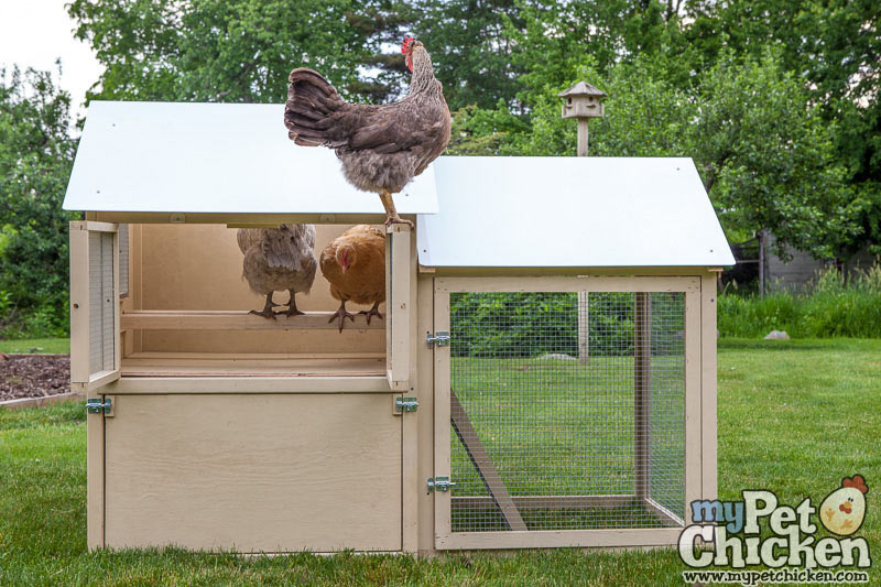 All American Chicken Coop 5 Chickens