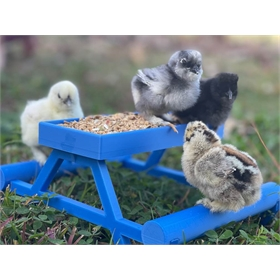 Chick Picnic Table
