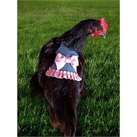 Fancy Hen Apron - Miss Anabel
