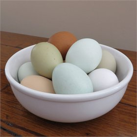 Hatching Eggs - Standard Assortment