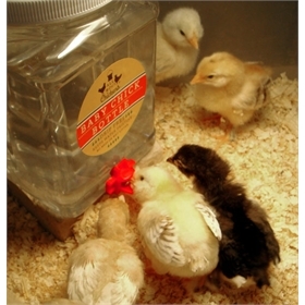 Brooder Bottle mess-free waterer, 64 oz