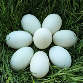 Blown Eggs for Crafting: Green Duck Eggs