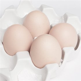 Hatching Eggs: Egyptian Fayoumi