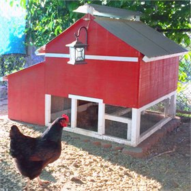 The Smart Chicken Coop (up to 6 chickens)