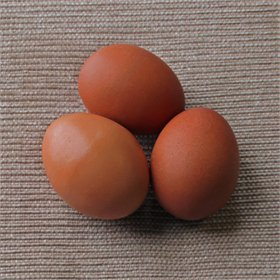 Hatching Eggs: Blue Birchen Marans