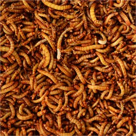 Dried Mealworms (1lb, 5lb, 11lb)
