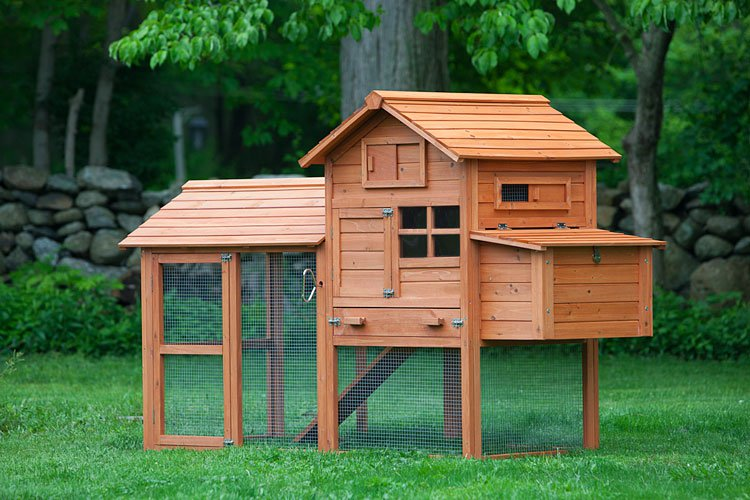 backyard chicken coop with attached run