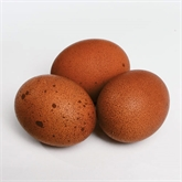 Hatching Eggs - Black Copper Marans
