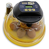 Mini Advance Automatic Incubator